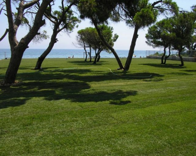 Sod Varieties Asod The Largest Producer In Greece