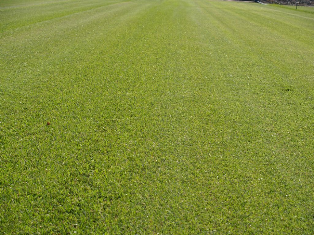 Sod Advantages Production Of Ready Turf Asod